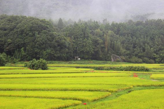おおいたの美しい風景☆田染荘の棚田と彼岸花の赤_a0329820_13364758.jpg