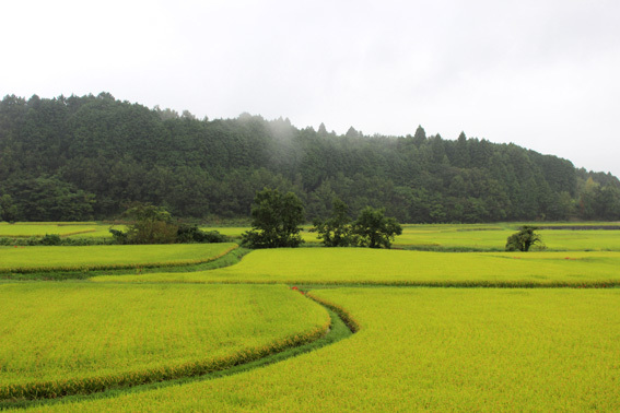 おおいたの美しい風景☆田染荘の棚田と彼岸花の赤_a0329820_13365097.jpg
