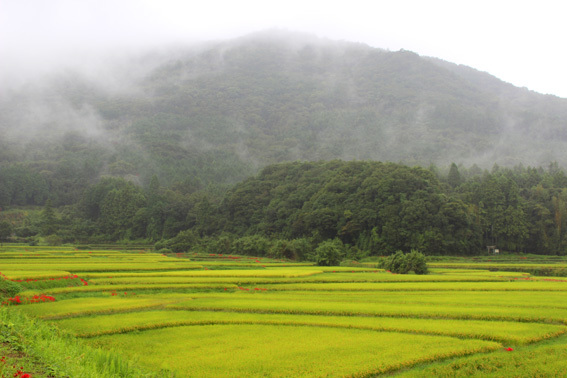 おおいたの美しい風景☆田染荘の棚田と彼岸花の赤_a0329820_13365346.jpg