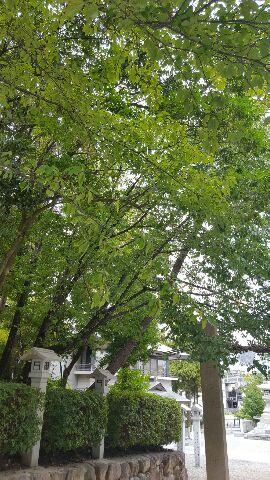 緑が……_f0126121_13201723.jpg