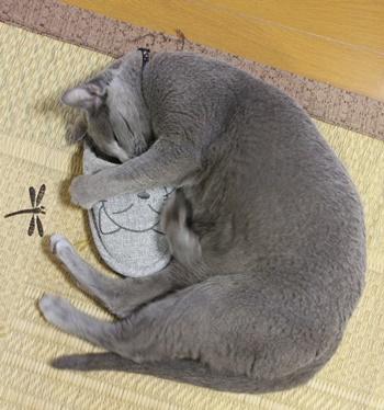 スリッパ大好き猫の寝姿_b0312424_685471.jpg