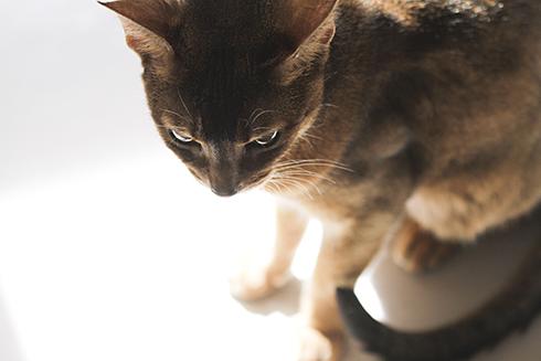 [猫的]光と猫_e0090124_22504018.jpg