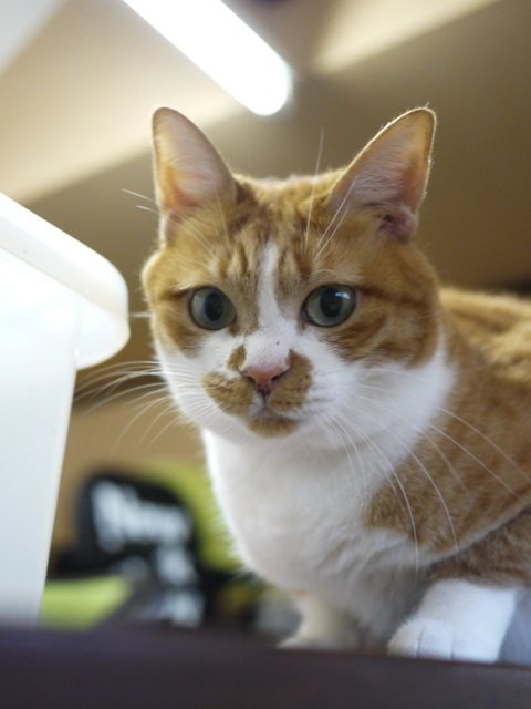 猫のお留守番 がじゅちゃんまるちゃん編 ∔ うさぎのお留守番 ぷちろーくん編。_a0143140_22432950.jpg