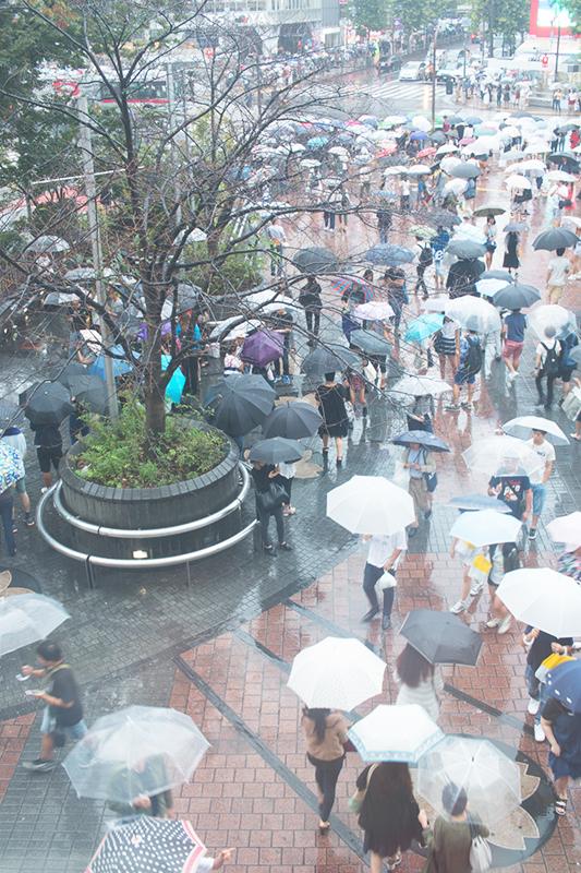 雨、雨。そして雨_a0003650_22592936.jpg