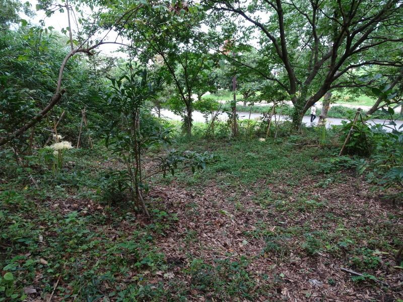 ダムの作り直し・・・うみべの森_c0108460_16512020.jpg