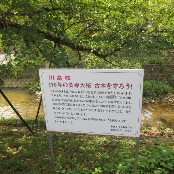 佐保川下り 歩いて歩いて_c0001670_20404201.jpg