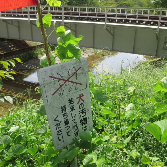 佐保川下り 歩いて歩いて_c0001670_20405394.jpg