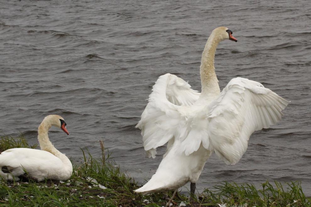 ウトナイ湖へ_c0360399_2014986.jpg