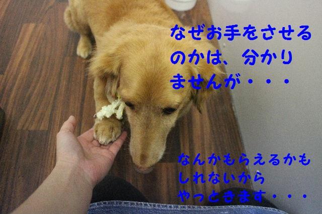 かなり迷惑!!_b0130018_14565783.jpg