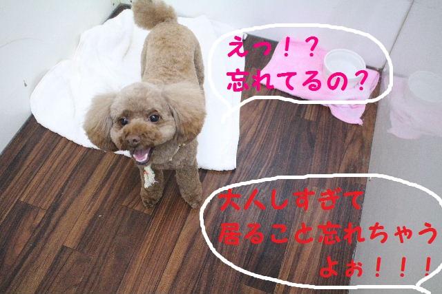 かなり迷惑!!_b0130018_1511953.jpg