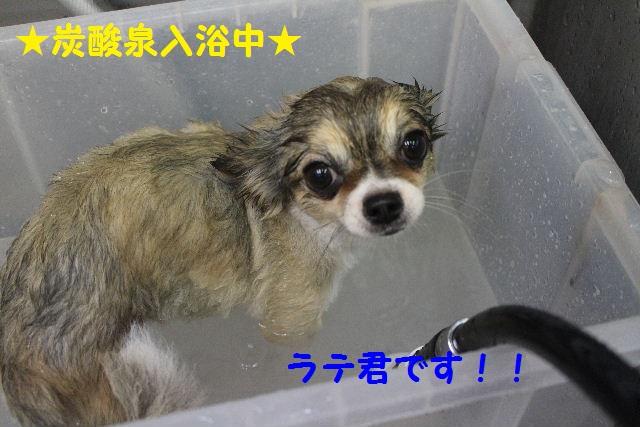 かなり迷惑!!_b0130018_1525476.jpg