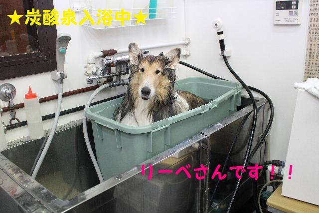 かなり迷惑!!_b0130018_1555977.jpg