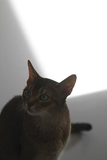 [猫的]光と猫_e0090124_23223432.jpg