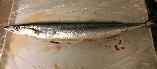 16.09.23(金) 初秋刀魚❗️_f0035232_21541335.jpg