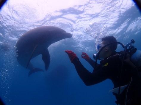 9月23日スーパーミラクル体験ダイビング!!イルカ現る_c0070933_22101185.jpg