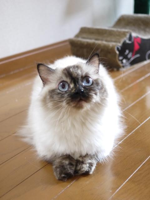 猫のお留守番 マリーちゃん編。_a0143140_21422841.jpg