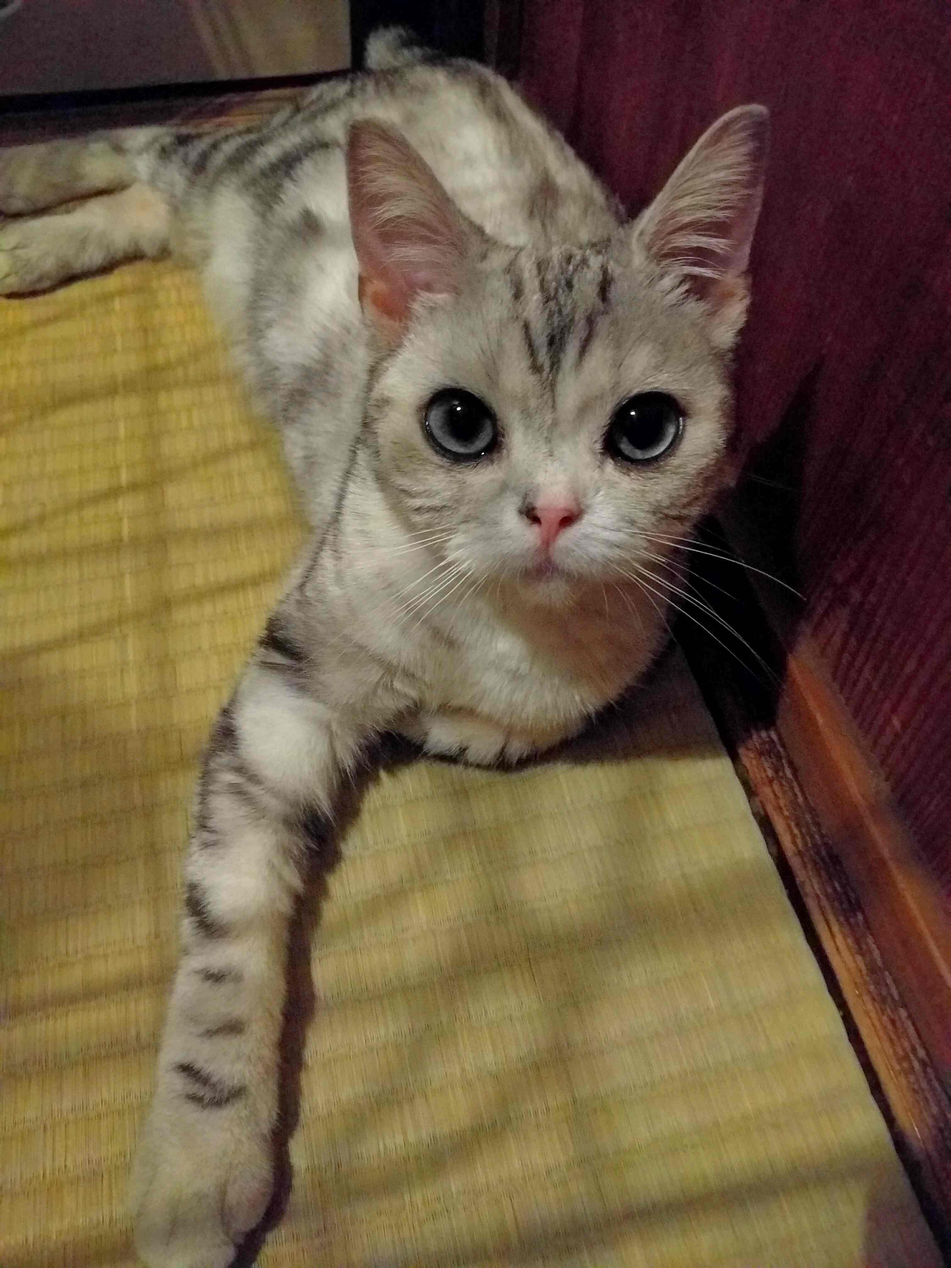 迷い猫ゆきちゃんの話3_a0265743_0131366.jpg