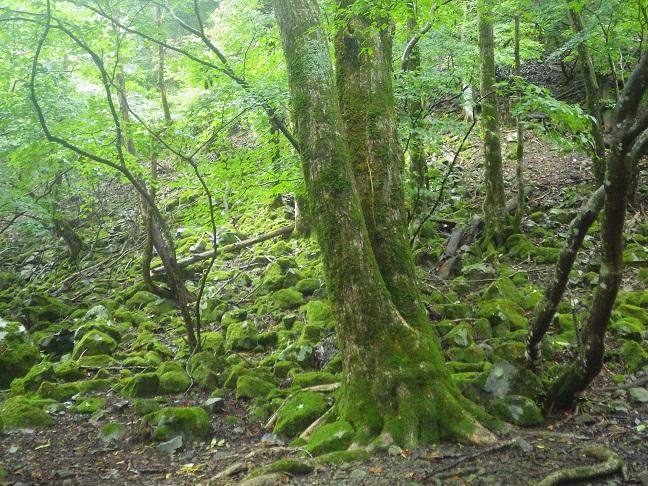 京都・滋賀の山旅・・2日目_e0164643_167176.jpg