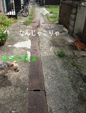 d0013645_15001479.jpg