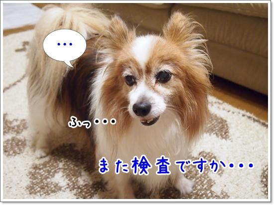 d0013149_00302867.jpg