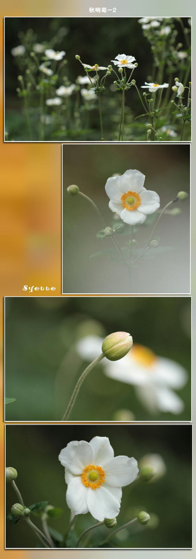 f0164592_13324974.jpg