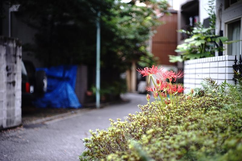 路地裏に咲く花_a0350198_21333113.jpg