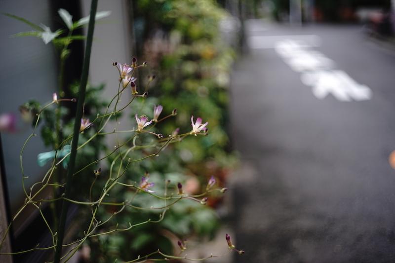 路地裏に咲く花_a0350198_21334606.jpg