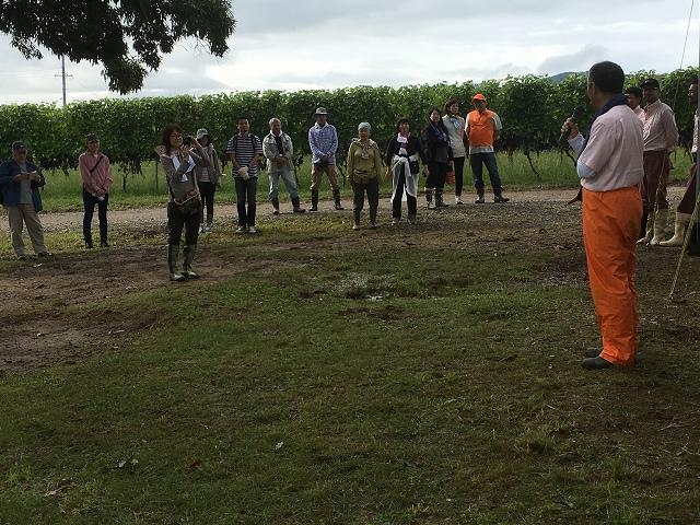 ワイン用ぶどう収穫体験へ_c0124100_22311655.jpg