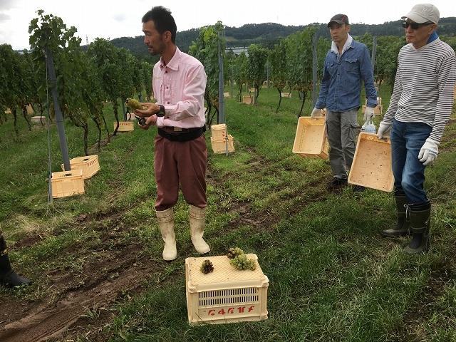 ワイン用ぶどう収穫体験へ_c0124100_22313555.jpg