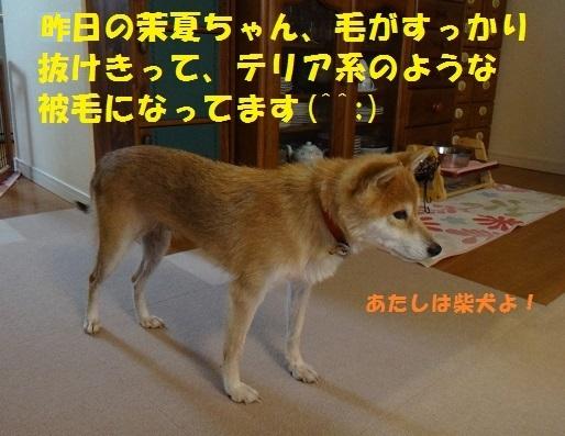 f0121712_15380533.jpg