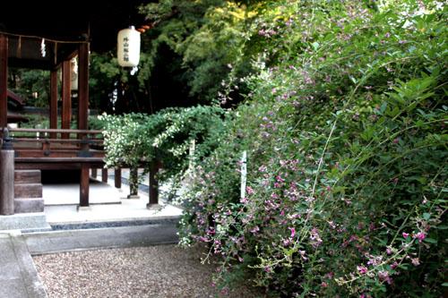 梨の木神社 萩まつり_e0048413_14332250.jpg