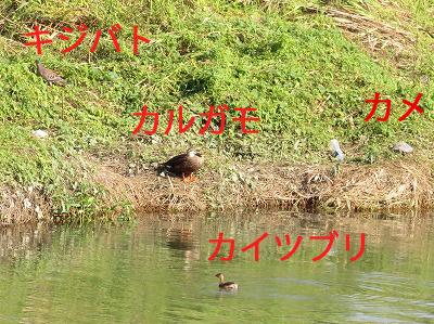 b0075917_16253732.jpg