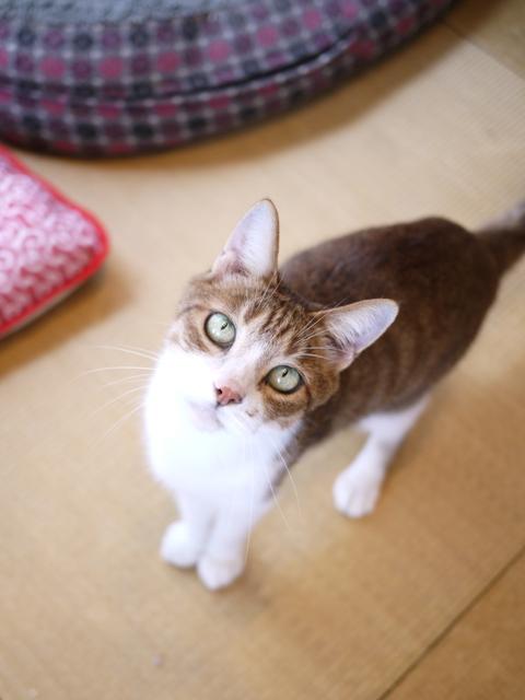 猫のお留守番 ウィンクくんララちゃんピケちゃんエンジェルちゃん編。_a0143140_20571754.jpg