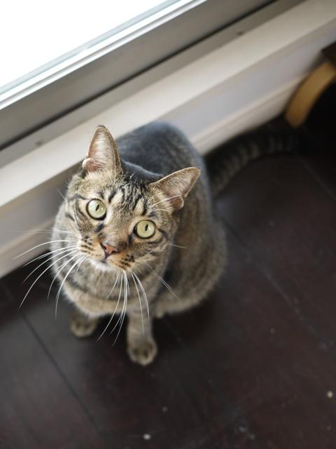猫のお留守番 ウィンクくんララちゃんピケちゃんエンジェルちゃん編。_a0143140_20574636.jpg