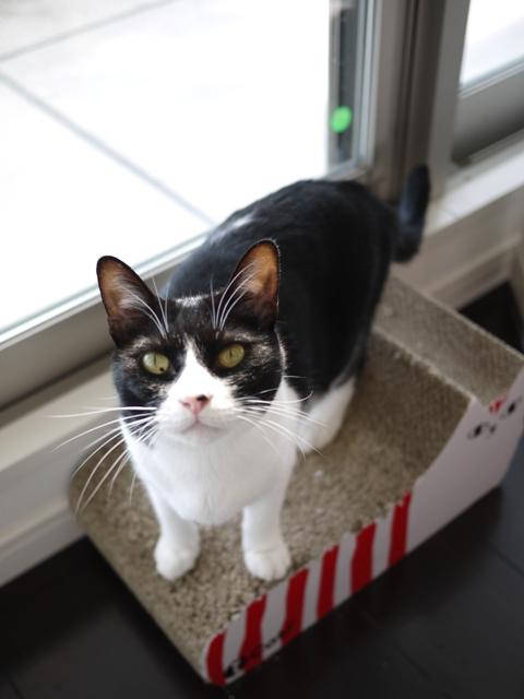 猫のお留守番 ウィンクくんララちゃんピケちゃんエンジェルちゃん編。_a0143140_20581880.jpg
