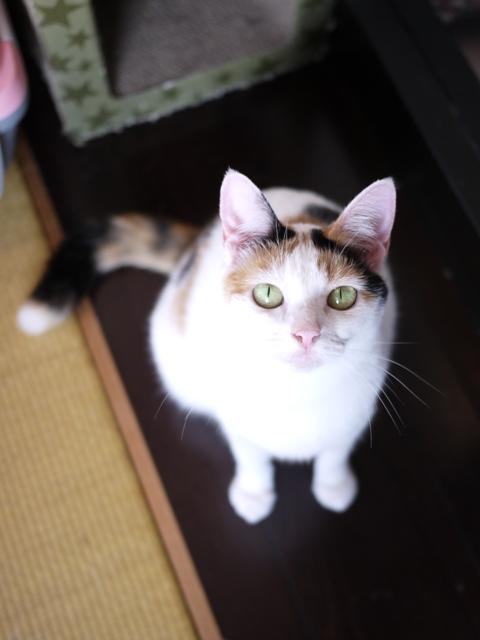 猫のお留守番 ウィンクくんララちゃんピケちゃんエンジェルちゃん編。_a0143140_20583977.jpg