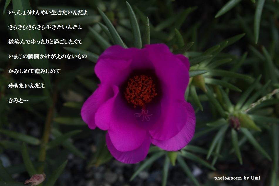 f0351844_15350077.jpg