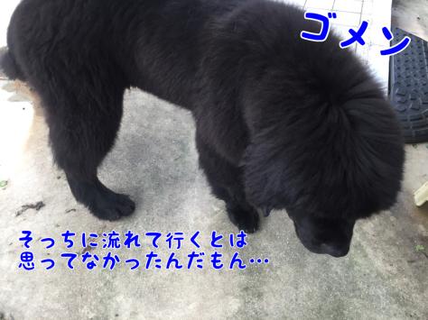 c0343364_08343146.jpg