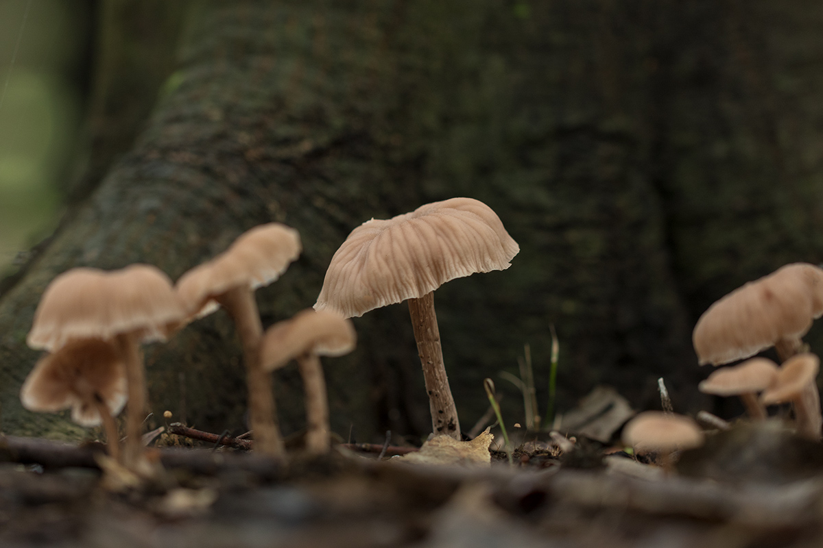森はキノコでいっぱい_a0261169_14362898.jpg