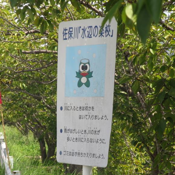 佐保川下り 歩いて歩いて歩いて_c0001670_07583505.jpg