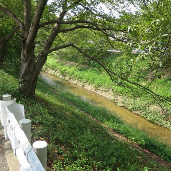 佐保川下り 歩いて歩いて歩いて_c0001670_08011271.jpg