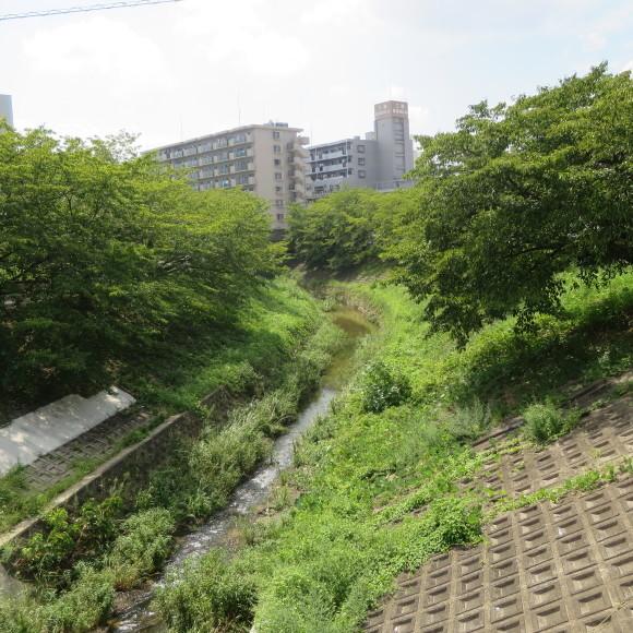 佐保川下り 歩いて歩いて歩いて_c0001670_08030969.jpg