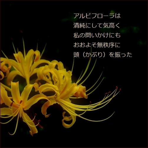b0154475_15004541.jpg