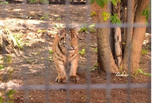 Asahiyama Zoo ♪3_d0342382_23230644.jpg