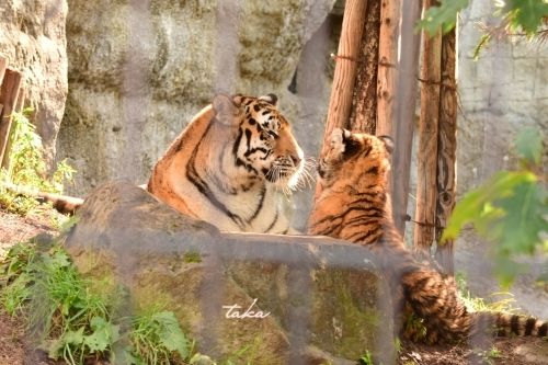 Asahiyama Zoo ♪3_d0342382_23253108.jpg