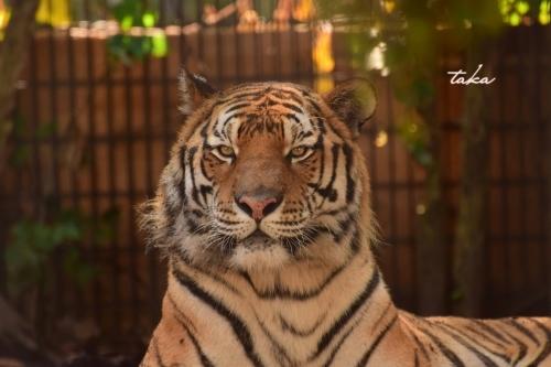 Asahiyama Zoo ♪3_d0342382_23263566.jpg