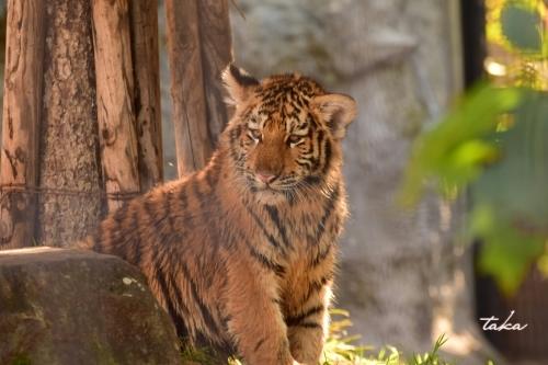 Asahiyama Zoo ♪3_d0342382_23272310.jpg