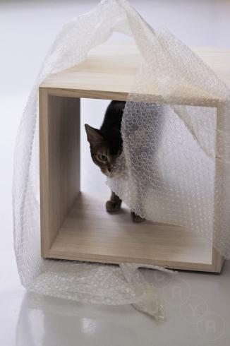 [猫的]チェック_e0090124_21364173.jpg