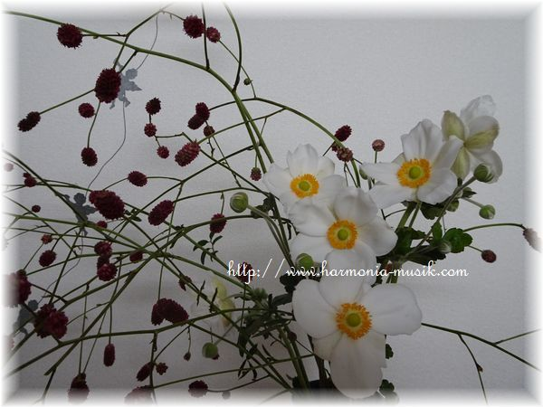 秋の花と。。。_d0165645_17481279.jpg