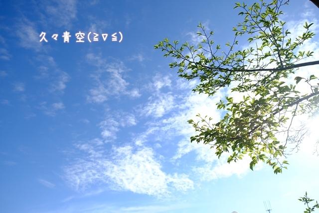 a0322747_10201007.jpg